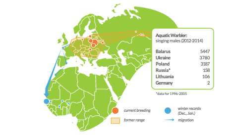 Global distribution Aquatic Warbler