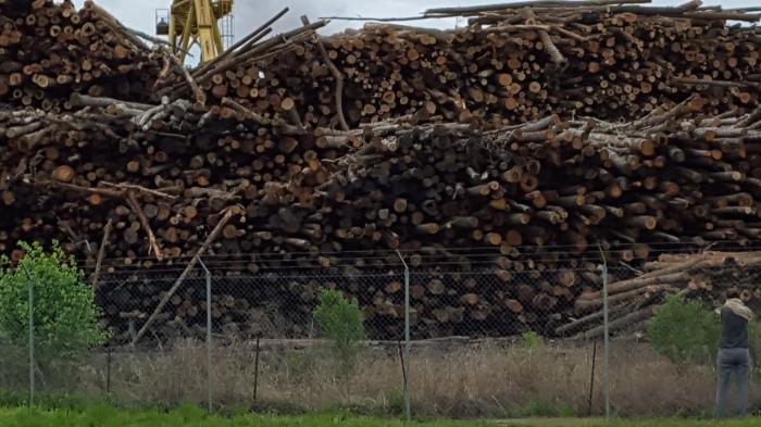 Enviva Ahoskie NC Pellet Mill 010416