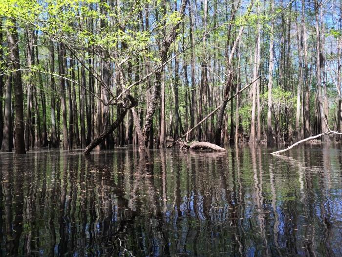 1-us_black-river_bioenergy