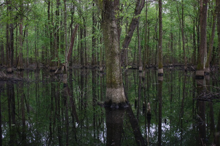 3-us-wetland-forest_close-to-enviva-plant-ahoskie_