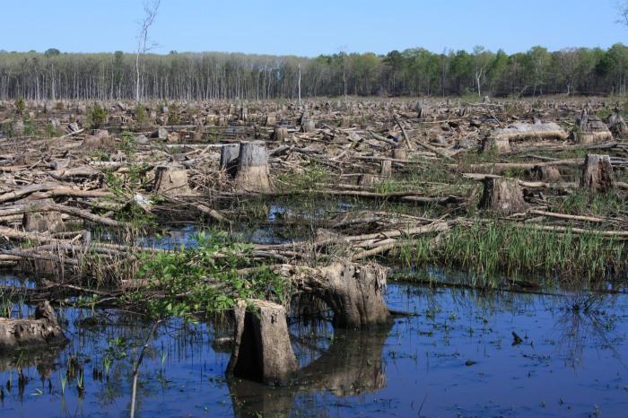 4-us-clearcut-along-side-roanoke-river_bioenergy