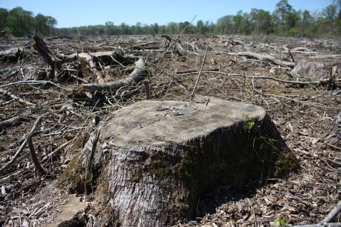 5-us-clearcut-along-side-roanoke-river_bioenergy