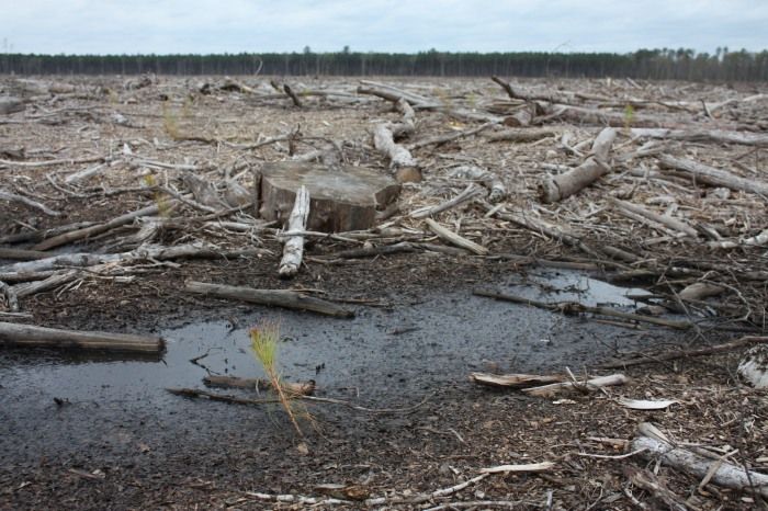 8-us-clearcut-conversion_between-ahoskie-and-southampton-plant_bioenergy